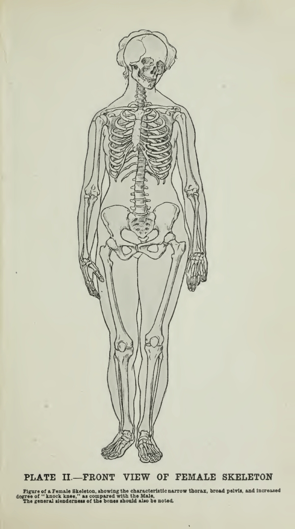 Human Anatomy For Artists Plate 02drawing By Innes Fripp Ragged