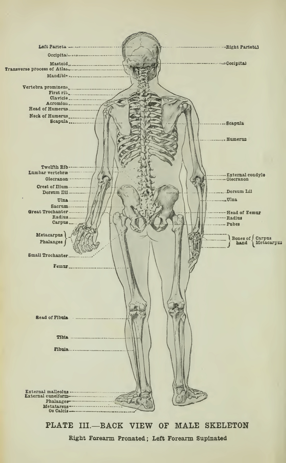 Anatomical Reference Sheets – Ragged Claws Network