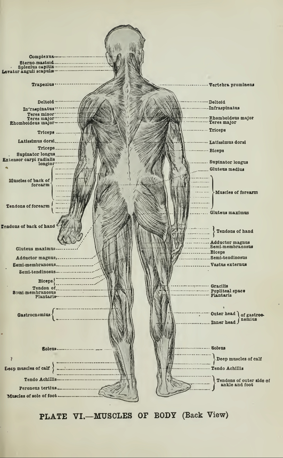 Anatomical Reference Sheets Ragged Claws Network